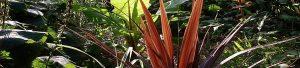 Koop palmbomen voor jouw interieur